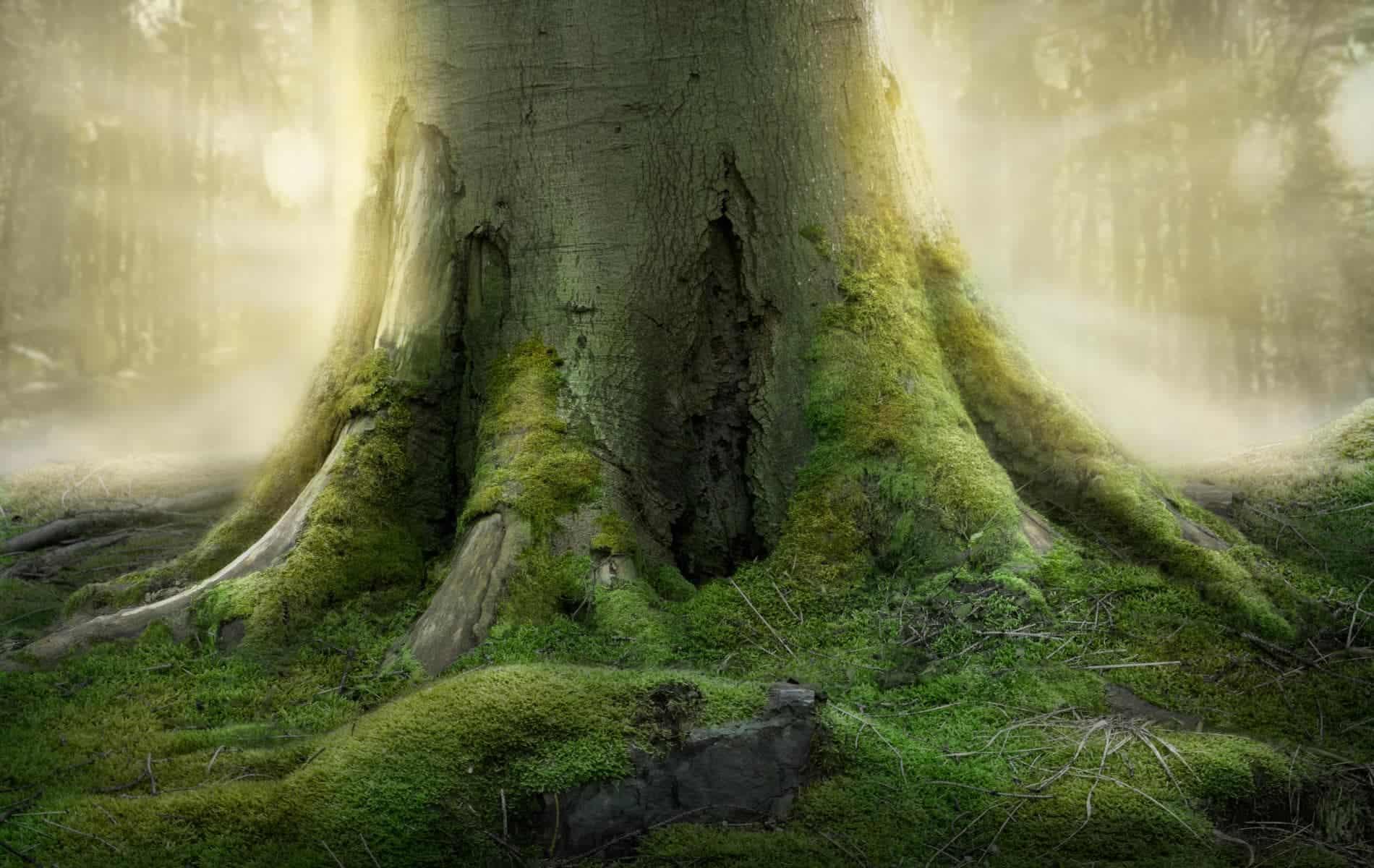 Waldbaden Baum Wurzel Biohacking Bad Duerrheim