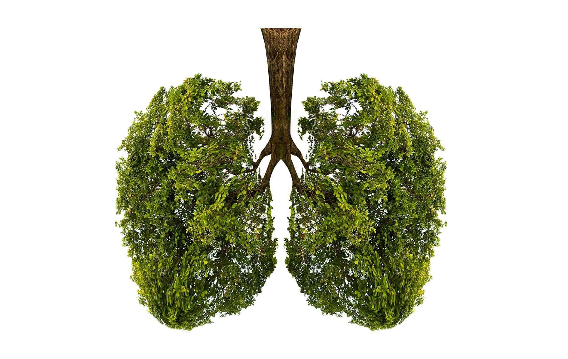 Waldspaziergang zur Kräftigung unserer Lunge - Biohacking Bad Dürrheim
