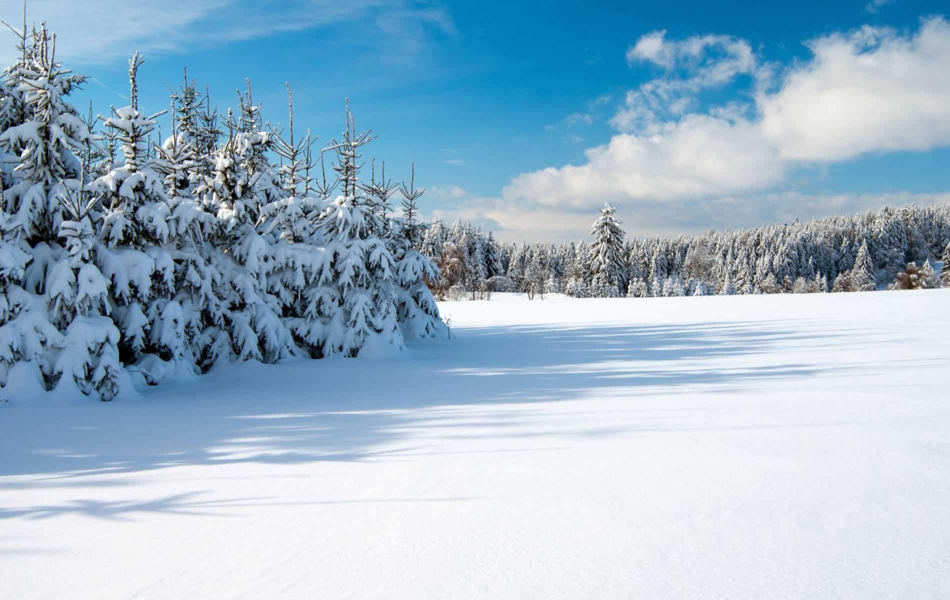 Schneelandschaft - Erholsamer Kältespaziergang für einen klaren Kopf - Biohacking Bad Dürrheim