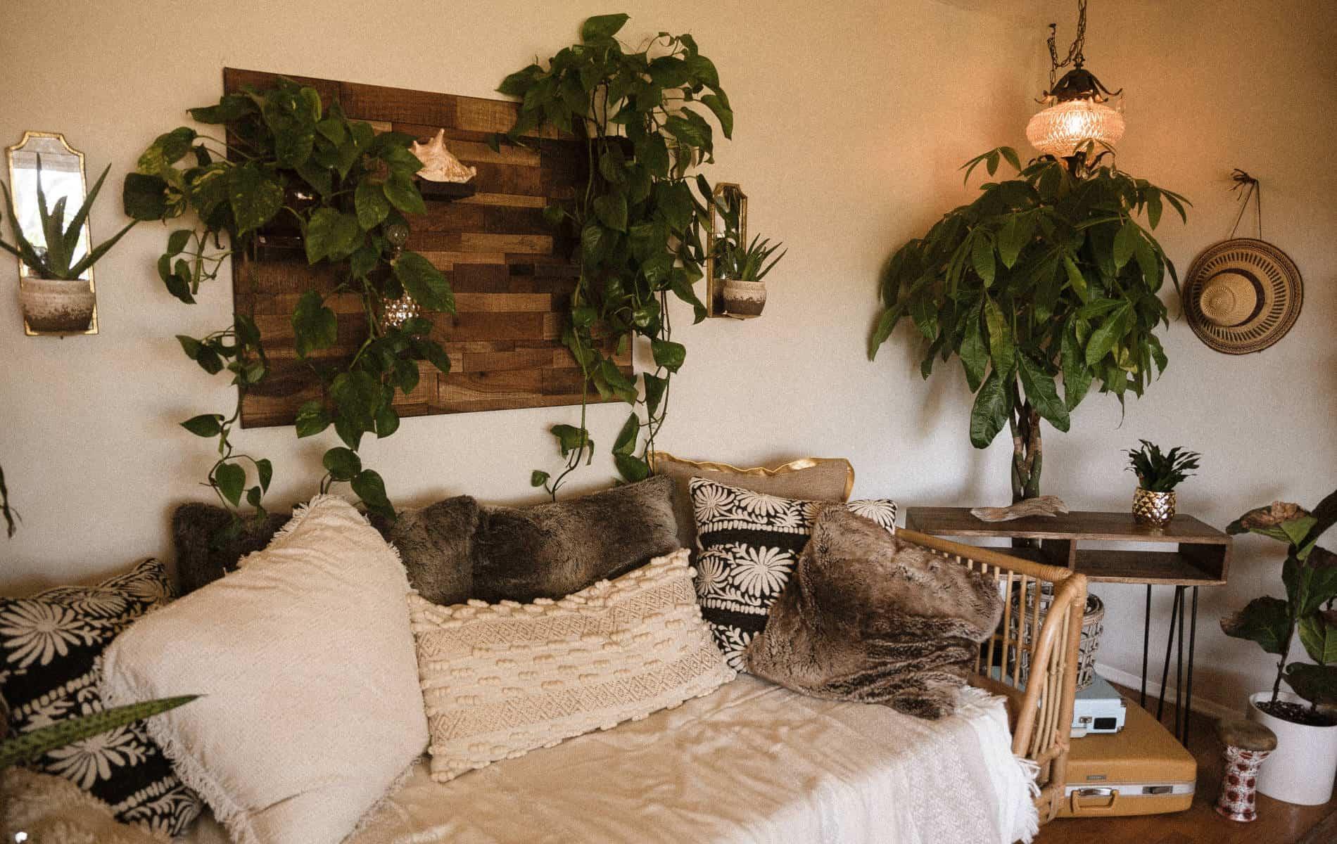 Zimmerpflanzen für eine Wohlfühloase daheim - Biohacking Bad Dürrheim