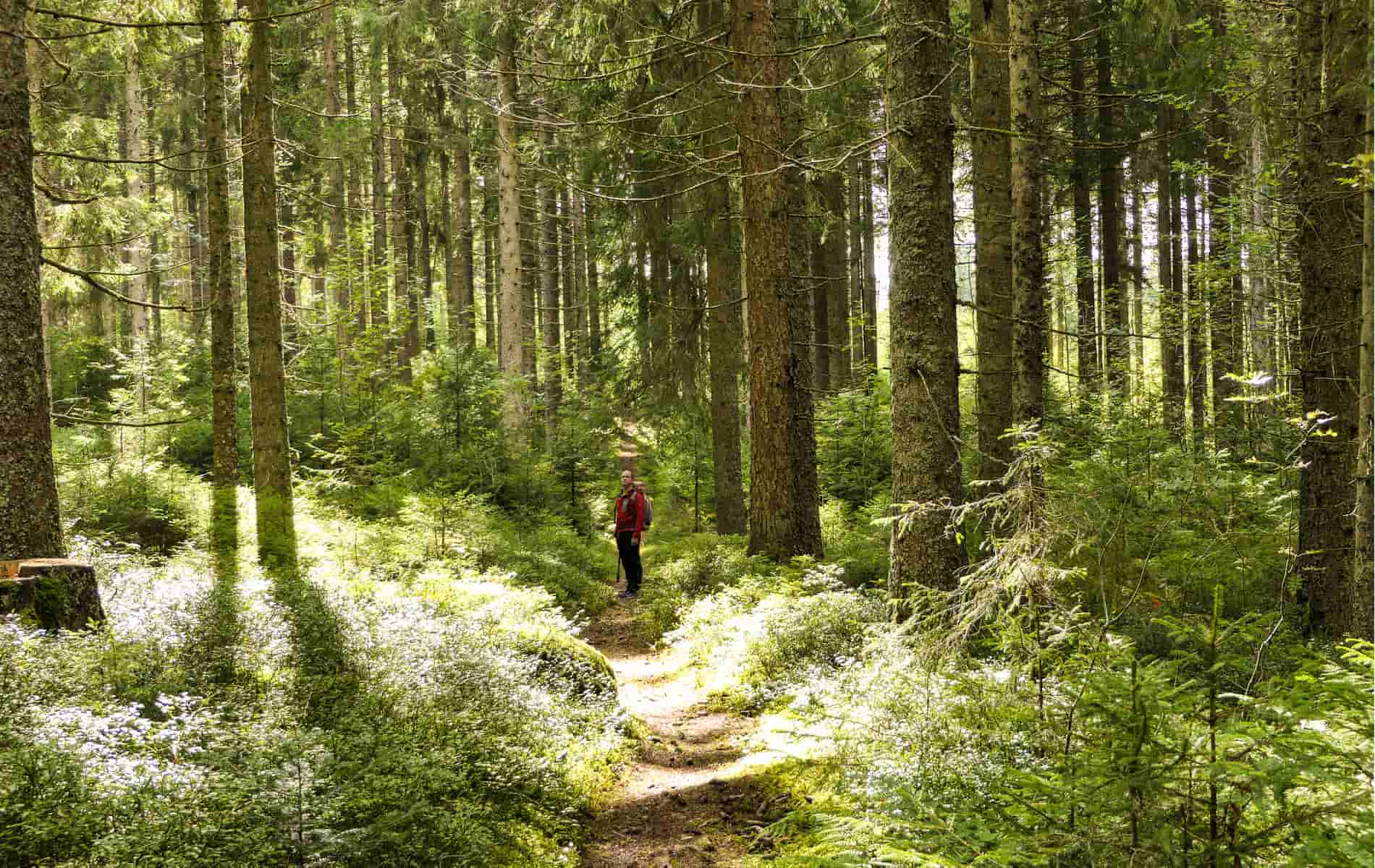 Mann steht auf schmalem Pfad im Wald