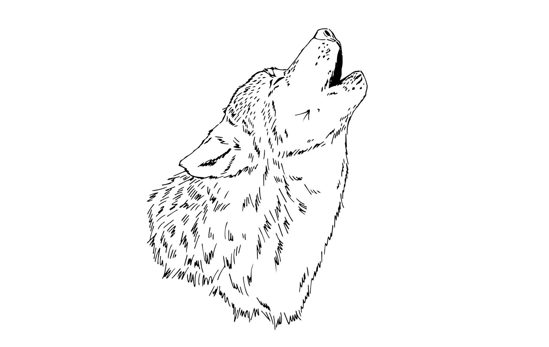 Skizze eines heulenden Wolfs