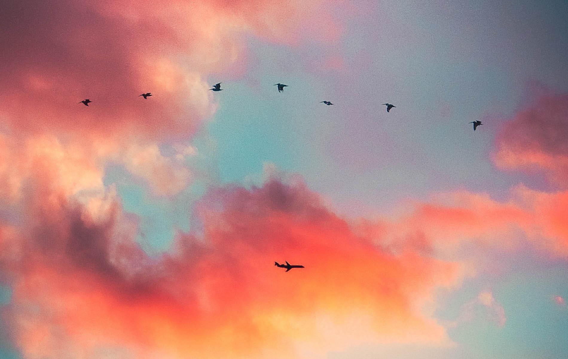 Flugzeug und Vögel am Himmel vor rot-orangenen Wolken